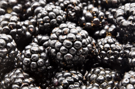 Fresh Ripe Blackberries  photo