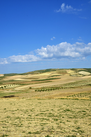 highroad: field of olive trees in Andalusia Stock Photo