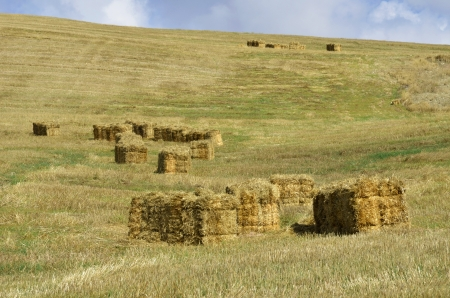 straw bales in the countryside photo
