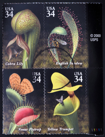 UNITED STATES OF AMERICA - CIRCA 2001: Stamps printed in USA dedicated to Carnivorous Plants, circa 2001 photo