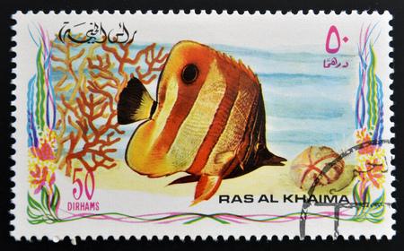 copperband butterflyfish: RAS AL-KHAIMAH - CIRCA 2006: A stamp printed in Ras al-Khaimah shows a fish, Chelmon rostratus, Copperband butterflyfish, circa 2006