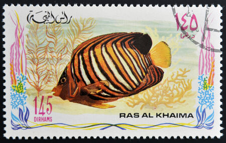 royal angelfish: RAS AL-KHAIMAH - CIRCA 2006: A stamp printed in Ras al-Khaimah shows a fish, Pygoplites diacanthus, Royal angelfish, circa 2006