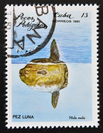 CUBA - CIRCA 1981: A Stamp printed in Cuba shows a Ocean Sunfish with the inscription Mola mola from the series Pelagic Fish, circa 1981  Stok Fotoğraf