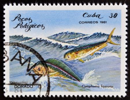 estampilla: CUBA - CIRCA 1981: A Stamp printed in Cuba shows a Dorado with the inscription Coryphaena hippurus from the series Pelagic Fish, circa 1981  Stock Photo
