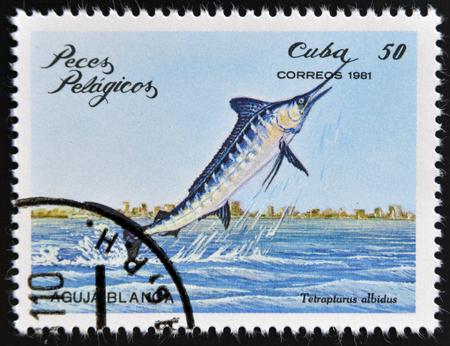 CUBA - CIRCA 1981: A Stamp printed in Cuba shows a white marlin with the inscription Tetrapturus albidus from the series Pelagic Fish, circa 1981  photo