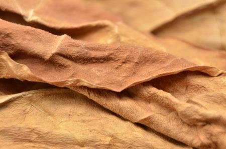 snuff: hoja de tabaco seco