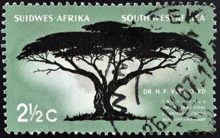 rsa: SOUTH WEST AFRICA - CIRCA 1967: A stamp printed in RSA shows Umbrella Thorn, Acacia tortilis, circa 1967
