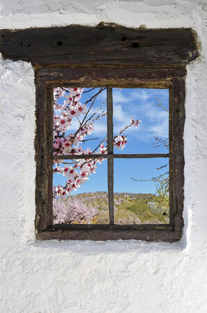almond grove in flower behind the old wooden window in the wall photo