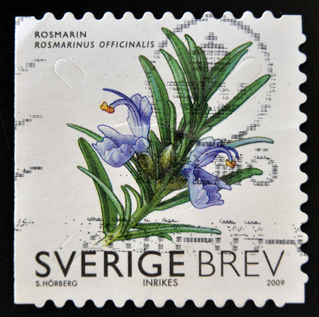 SWEDEN - CIRCA 2009: stamp printed in Sweden shows Rosemary, circa 2009 photo