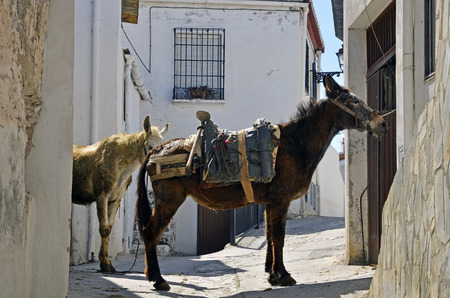 alpujarra: Mules in the Alpujarra