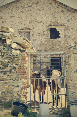 mules: mules in the abandoned house