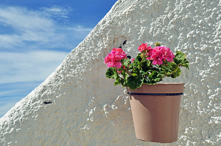 mediterranean homes: Flowers in pots on white wall