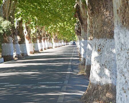twisty: Road between green trees (selective focus)