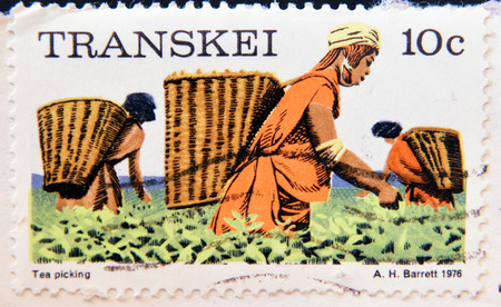 philatelist: REPUBLIC OF SOUTH AFRICA - CIRCA 1976: A stamp printed in Transkei shows women tea picking, circa 1976