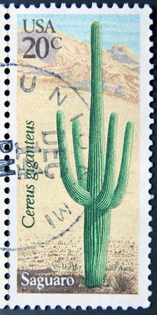 poststempel: UNITED STATES OF AMERICA - CIRCA 1981: Eine Briefmarke in den USA gedruckt zeigt Saguaro (Cereus giganteus), circa 1981
