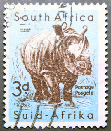 suid: SOUTH AFRICA - CIRCA 1954: A stamp printed in South Africa shows White Rhinoceros , circa 1954