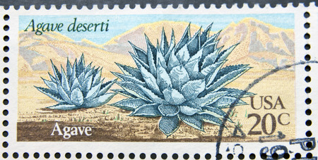 UNITED STATES OF AMERICA - CIRCA 1981: A stamp printed in USA shows Agave (Agave deserti), circa 1981