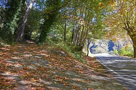 autumn road: A curving autumn road