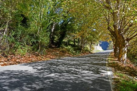 curving: A curving autumn road