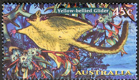 nocturnal: GRANADA, SPAIN - NOVEMBER 30, 2015: a stamp printed in the Australia shows Yellow-bellied Glider, Petaurus Australis, Arboreal and Nocturnal Gliding Possum, 1997 Editorial