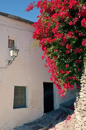 alpujarra: Bougainvillea in the streets of a small villa in the Alpujarra, Granada