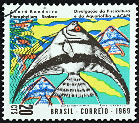 pterophyllum scalare: GRANADA, SPAIN - NOVEMBER 30, 2015: A stamp printed in Brazil shows three colorful fish, 1969