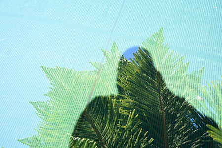 Double exposure silhouette of a man and a fir branch taken with the camera Stock Photo