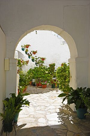planters: Andalusian patio