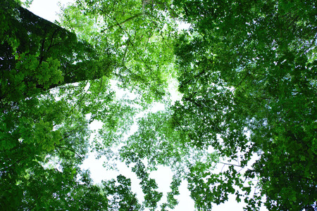 Double exposure of the tree canopy taken with the camera