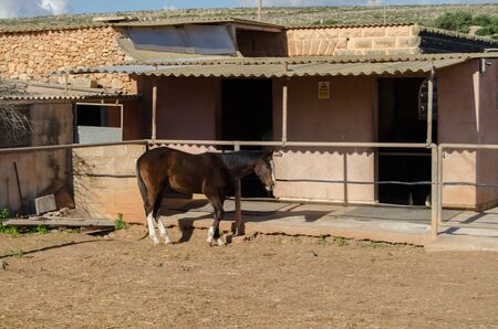 Brown horse in front of stable on the sand one horse