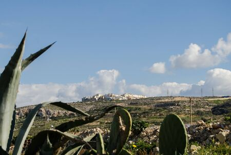Giant Aloe Vera plants over the blue sky with white clouds Mellieha Malta