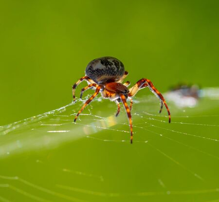 A spider sits in his web and is ready to rush to the next victim.