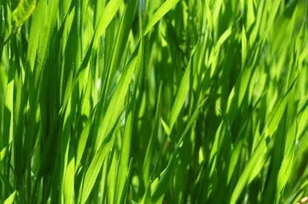 natural green background photo