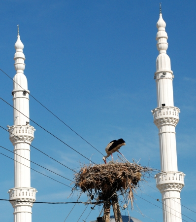 stork in the nest between two minarets photo