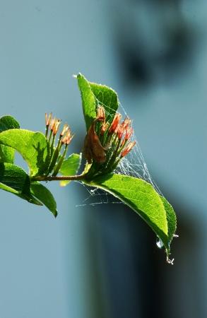 spider web on flower photo