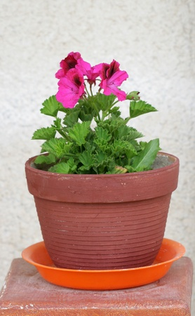 Spring Flowers In Pot photo