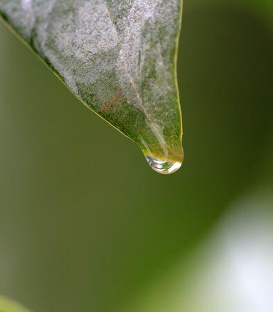 Water drop from rain photo