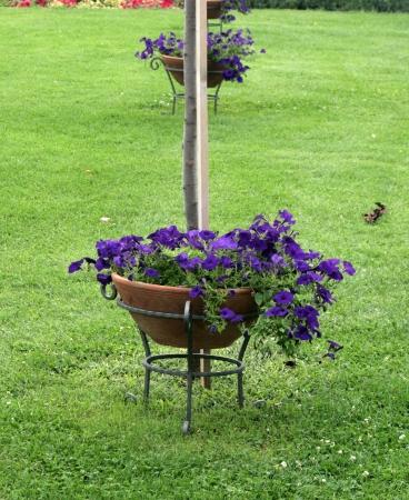 flower pot in garden in ohrid,macedonia photo