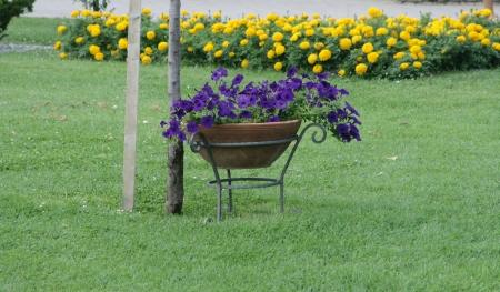 flower pot in garden photo