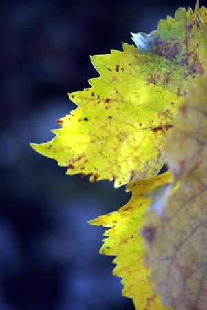 automn leaf photo