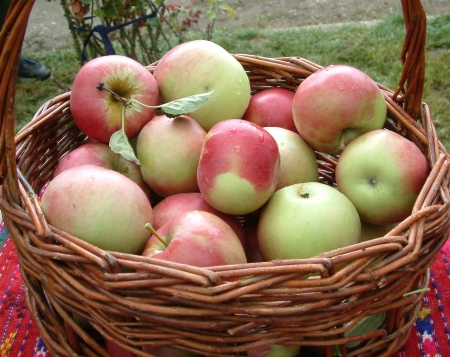 ida: apple basket with ida red