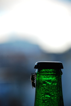 fly on green bottle photo