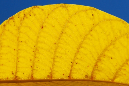macro of fall leaf photo