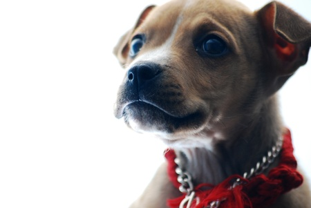 stafford: dog president
