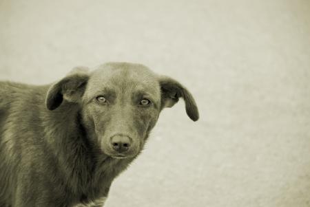 street dog Stock Photo - 17597050
