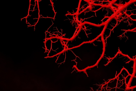 bloodstream: blood vessels Stock Photo