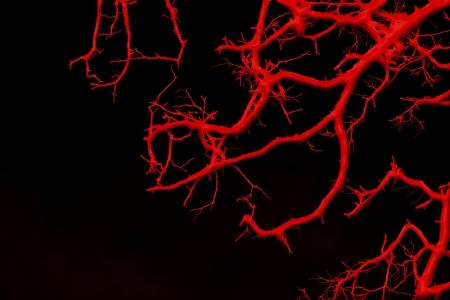 vasos sanguineos: vasos sangu�neos Foto de archivo