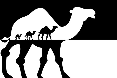 Camels shadows,  photo