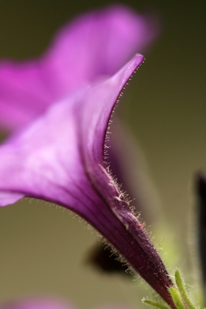 close up of purple flower photo