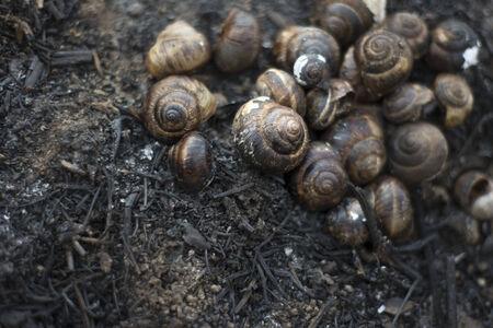 bushfire: snail houses after bushfire